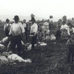 investire in pastorizia
